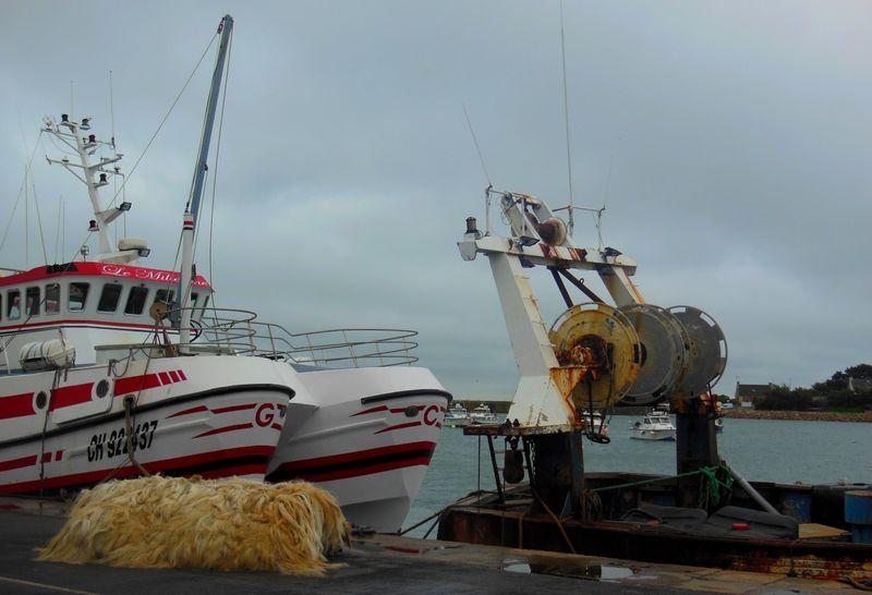 Bateaux de pêche et en guest, Pollux le chien