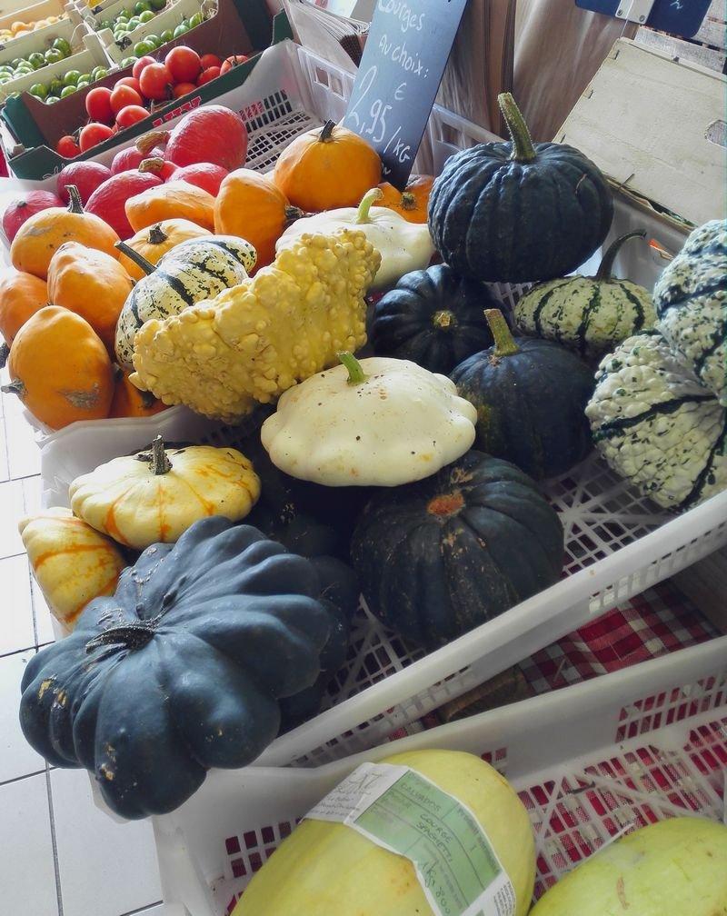 Cucurbitacées (photo prise en automne)