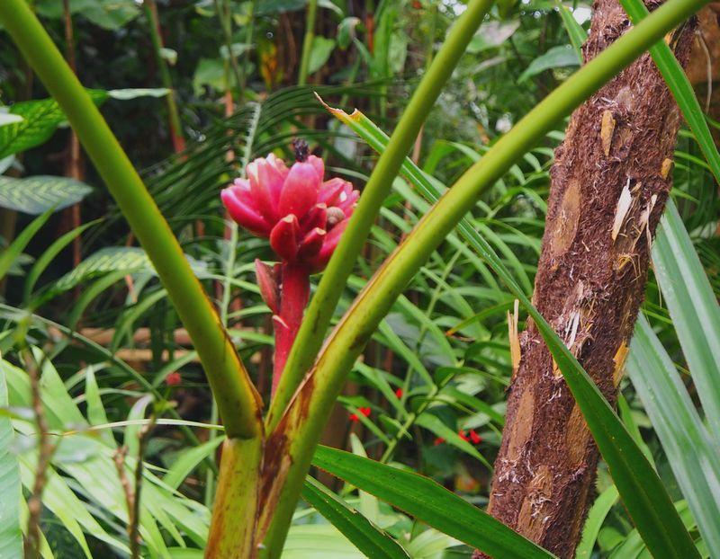 Dans la serre tropicale