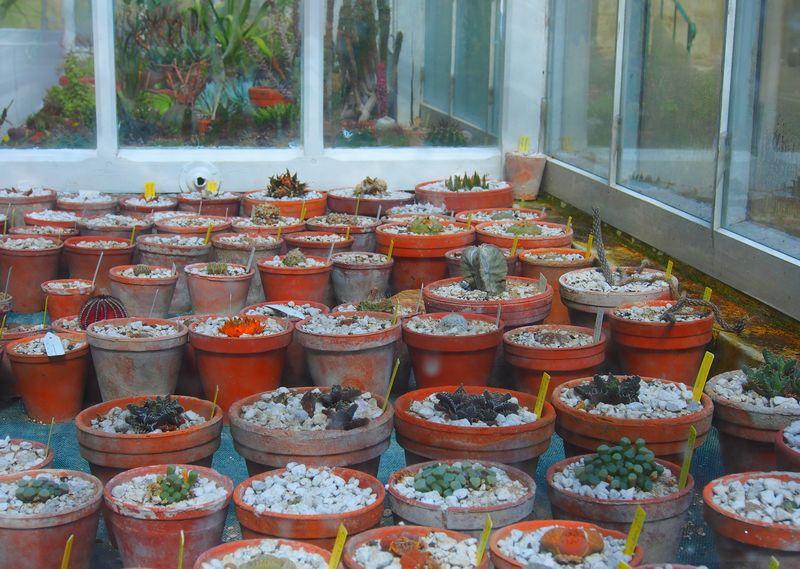 Pots à cactées et plantes grasses