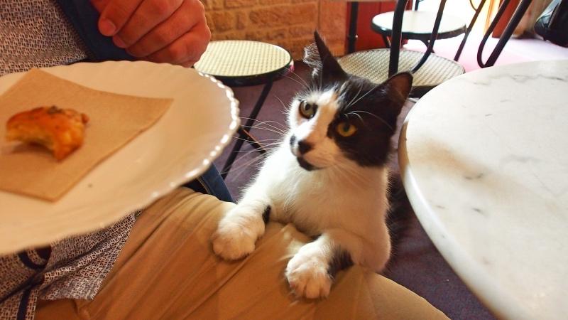 Milou-le-chat