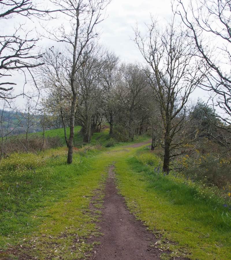 chemins-randonnee-suisse-normande