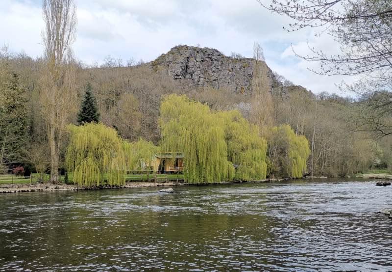 saule-pleureur-orne-suisse-normande