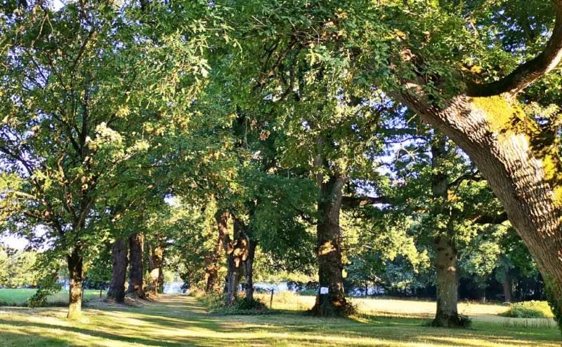 La grande allée d'arbres centenaires